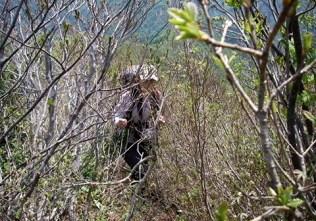 藪の中を行く