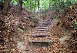 何とか、自然歩道に復帰したものの、もう階段 嫌。