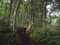 気持ちよくブナ林を歩く。
