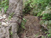 クサリに繋がれて朝から晩まで登山者を守るブナ