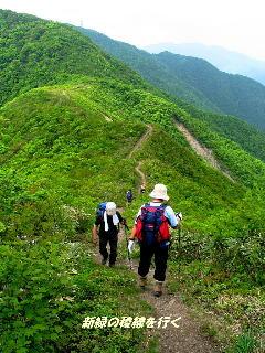 05新緑の稜線を行く