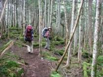 20.樹林帯を下る