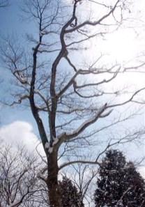 ⑨青空に雪花を付けた木々が美しい。