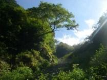 17横に伸びたダケカンバのところを右の樹林に入る