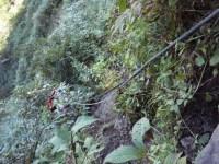 35‐藪の中をズルズルの下り。