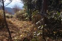 小坂からの登山道