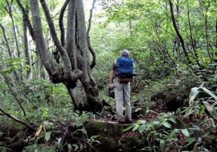 ⑤ブナ林には曾孫生えが多い。