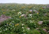 ⑪笙ヶ岳1635m山頂は一面お花畑。