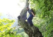 ②ブナの木の展望台、眺望は最高。