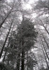 08.昨夜の雪が枝枝を飾るモノトーンの世界