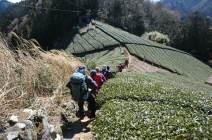 06茶畑の中の登山道