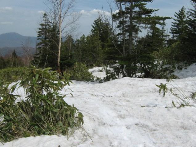 1930m付近(ツアーコース 最後は熊笹の中を雪を拾って滑る)