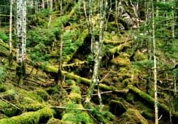 水沢山から大棚入山への倒木帯。
