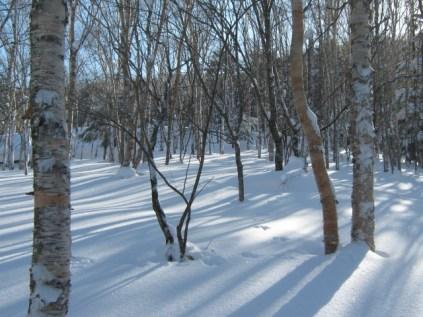 朝日にキラキラ光る雪、長く不規則に伸びた影が綺麗です