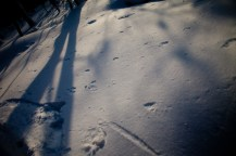 2012年01月29日御池岳 (78)