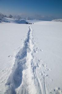 2012年01月29日御池岳 (73)
