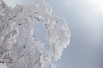 2012年01月29日御池岳 (20)