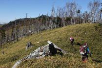 29 シラビソの枯れた林