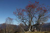 19 ナナカマドの赤い実が奇麗