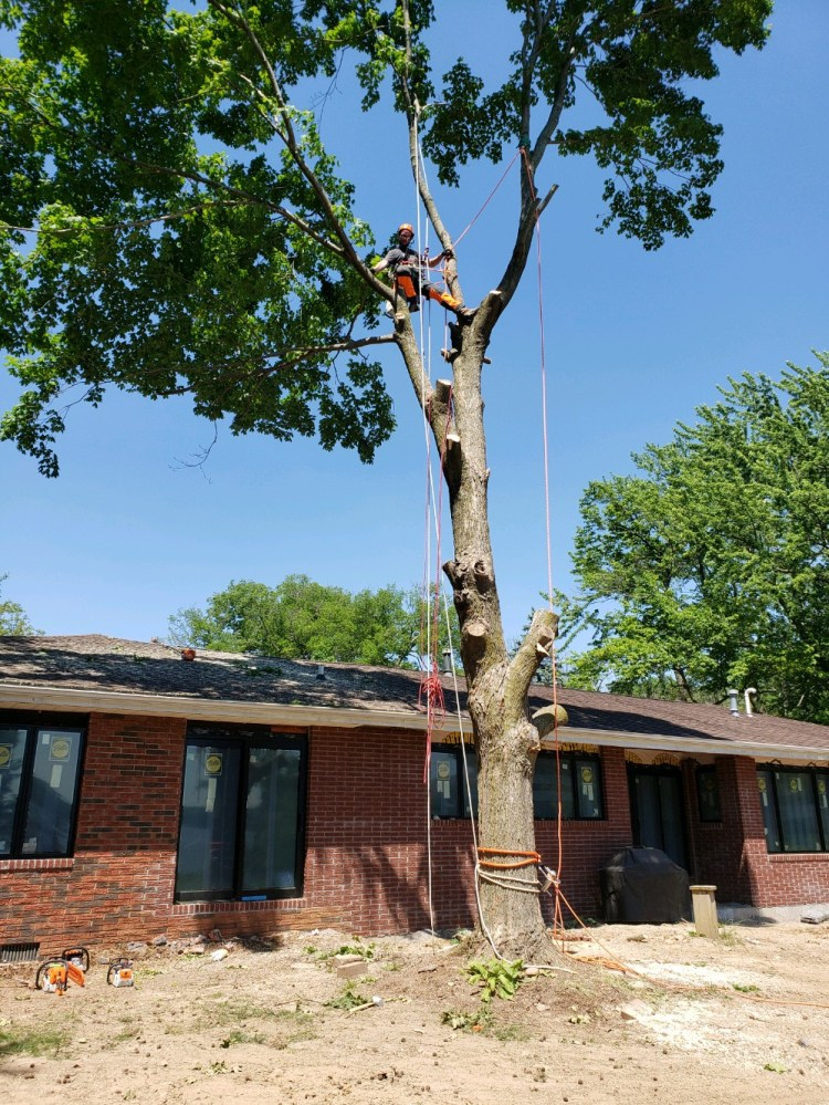 Tree Removal in Springfield Illinois