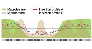 Different genomic landscapes are generated by integrating many large biological datasets. These landscapes proved further evidence as to whether an insertion site may be driving the formation of tumours or simply be an unimportant by-stander.  Credit: DOI: 10.1371/journal.pgen.1004250