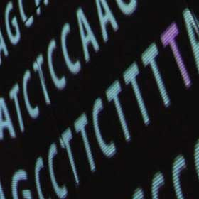 Exploring the other 98 per cent of the genome. Credit: Genome Research Limited