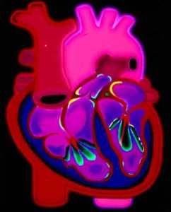 The artificial membrane opens brand new research avenues in cardiology. Credit: Wellcome Images