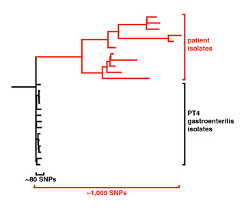 Patient SNPs tree.jpg