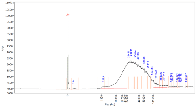 This is a femto pulse trace of the DNA fragment size, here it's mostly in the 20Kb+ range, ideally it'd be bigger- an perfect trace has one giant peak at ~165Kb