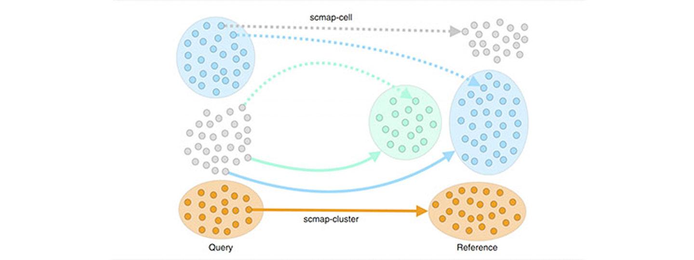 Scmap map of individual cells