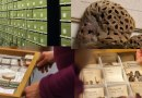 Darwin Tree of Life: focusing on fungi and probing plants