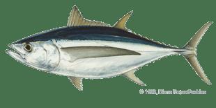 Tabel Ikan Laut Di Perairan Laut Sangiang  Sangiang Sea
