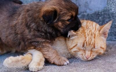 Llevarse como el Perro y el Gato