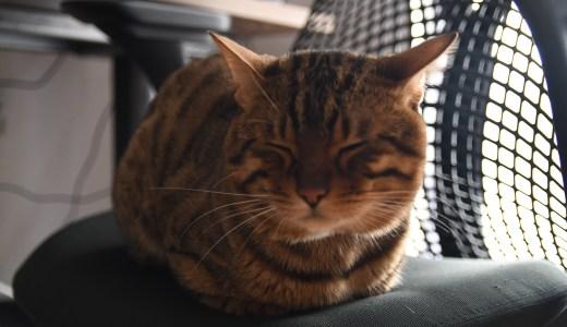 【猫じゃすり】膝の上でくつろぐ猫によってブログ更新が滞る