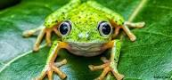 de cauchemar grenouille