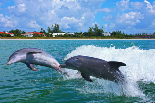 Summer time is dolphin time on Sanibel Island, JMA Photography photo