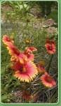 SCCF native Plant nursery