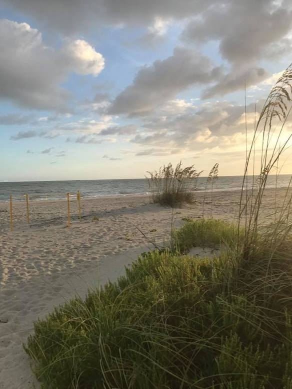 2017-08-07 beach nest