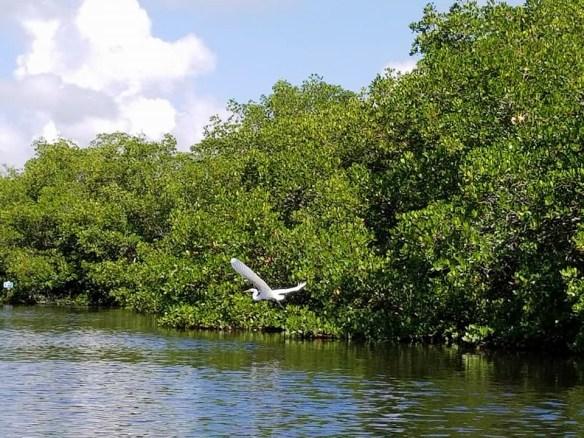 2017-10-14 Bird Life in Tarpon Bay