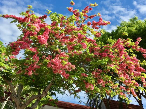 2018-05-24 Pink Moorings