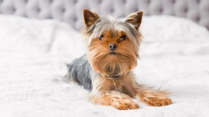 How to clean pet urine blog image