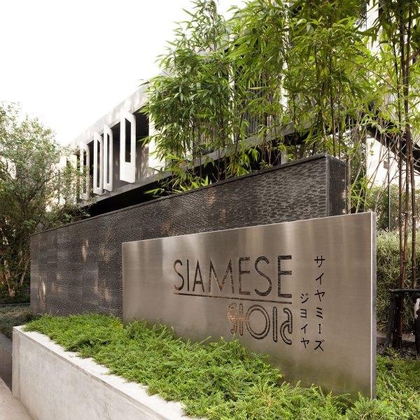 2011 Siamese Gioia Bangkok Sanitas Studio