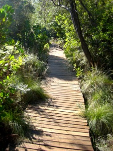 Life's pathways through the Jungle of Living