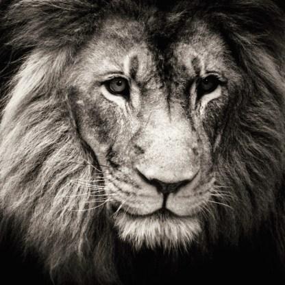 Jukani Lion
