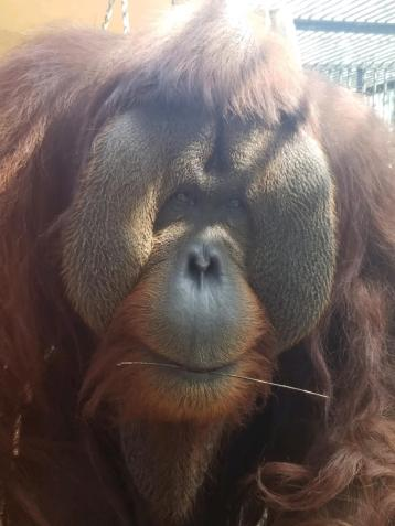 Taken by the caregivers at Suncoast Primate Sanctuary