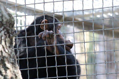 Suncoast Primate Sanctuary