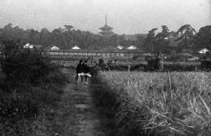 法隆寺五重塔を望む通学路。昭和30年代に撮影(斑鳩町立図書館提供)