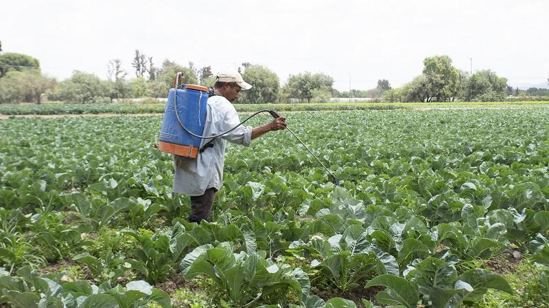 Desarrollo Rural y Agropecuario registra avances para que el campo soledense pueda acceder al programa de Seguro Catastrófico