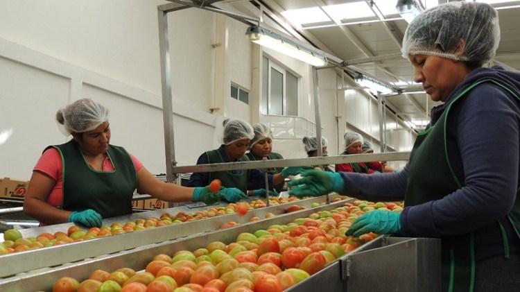 Superan los 48 mil MDP inversiones en el sector agropecuario y agroindustrial potosino