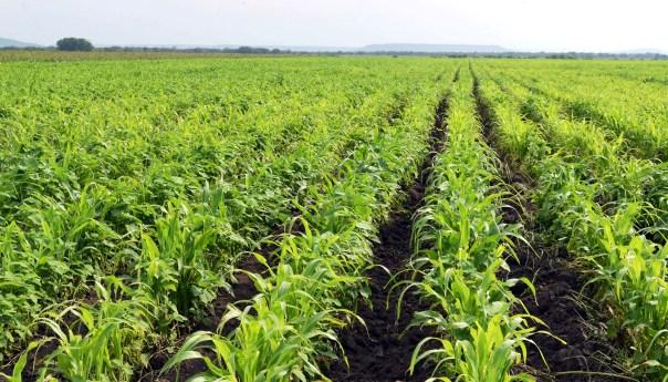 Avances significativos de Producción para el Bienestar; el objetivo: avanzar hacia la Autosuficiencia Alimentaria